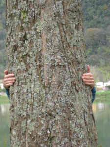 embrasser l'arbre