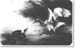 combat du serpent et de l'oiseau
