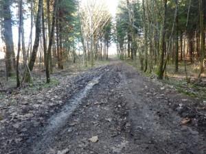 boe dans le bois à Montfaucon