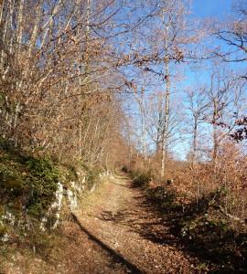 Sentier à Montfaucon