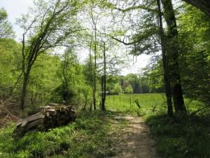 prairie, ruisseau vers le moulin Caillet