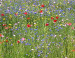 fleurs = été