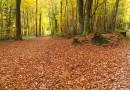L'automne : saison, santé et Qi Gong