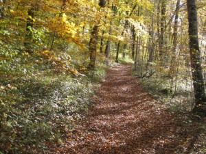 vers le Gougnot en automne
