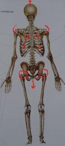 posture squelette