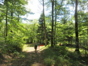 Source de la Loue lacet en sous bois
