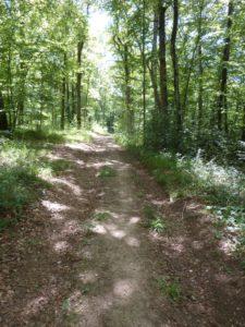 Ornans chemin dans le bois d'Ully