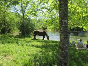 cheval comtois loue à Scey