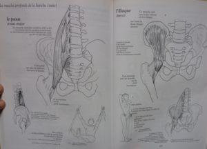 muscles profonds BCG