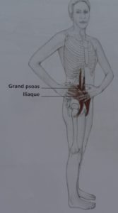 psoas et torsion du rachis
