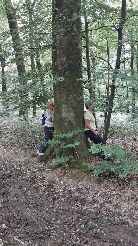 """l""""énergie des arbres"""