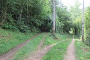 Cusance chemin qui monte vers Montivernage