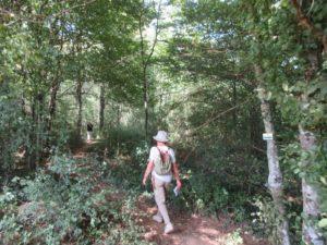 dans le bois au dessus de Cusance