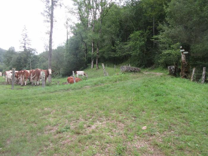 Châteauvieux vaches